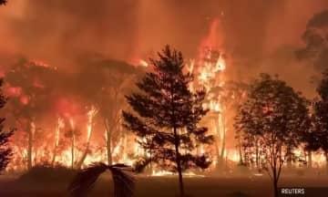 Ambil iktibar kebakaran hutan di Australia – Aktivis alam sekitar