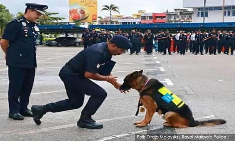 Lao Wu – Anjing pertama terima pingat Jasamu Dikenang